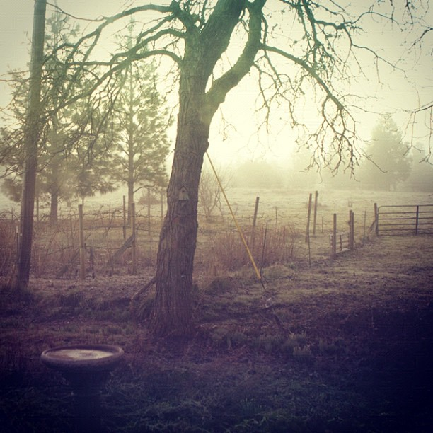 Farm Early AM