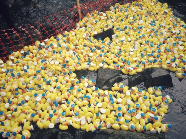 Catawba Riverkeeper Freedom Park Duckrace Frundraiser