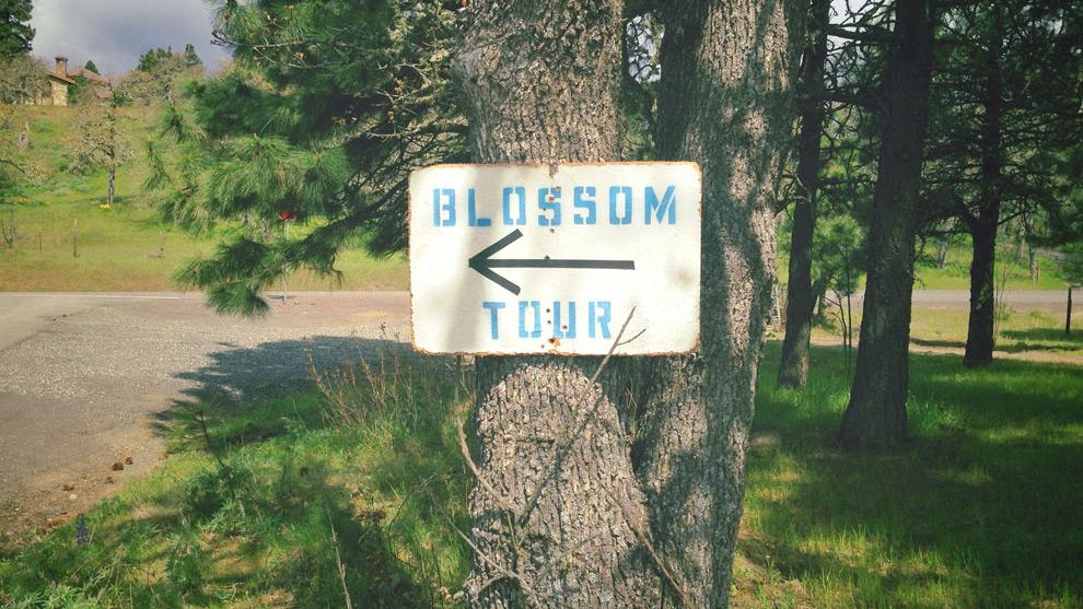Oregon Blossom Tour signpost